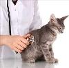 Ветеринарные клиники в Верхозиме